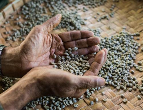 Kávová farma Nine One Coffee na severu Thajska